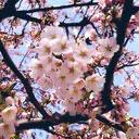 春風-harukaze-のユーザーアイコン