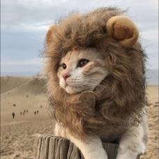 アイコン猫だけど名前はじょん🐶のユーザーアイコン