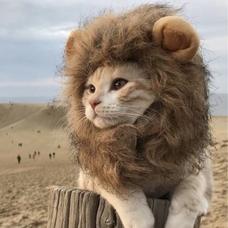 じょんだもん(-H-´  )プィッ……猫だけどのユーザーアイコン