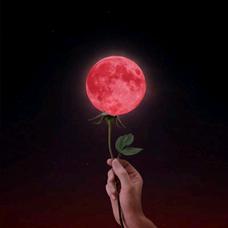 紅い月の吸血鬼【公式】のユーザーアイコン