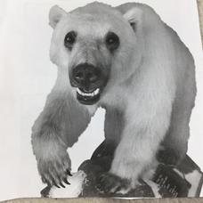 ハイブリッド熊のユーザーアイコン