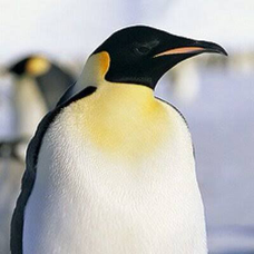コウテイペンギンのユーザーアイコン