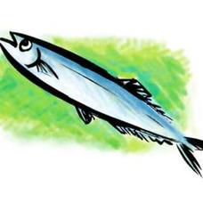 秋刀魚のユーザーアイコン