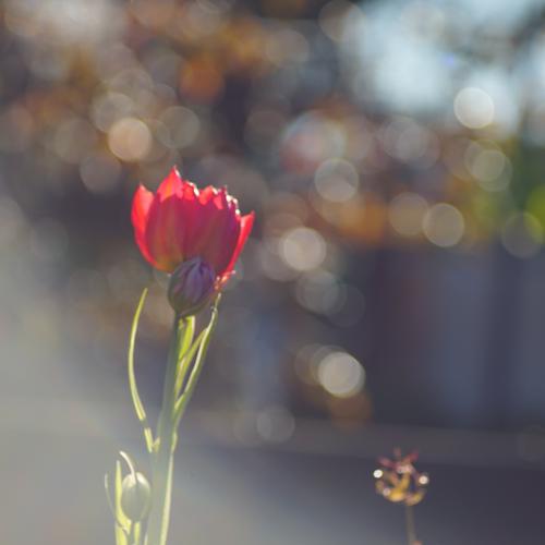 Flowerのユーザーアイコン