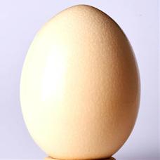 天然の卵(てんたま)のユーザーアイコン