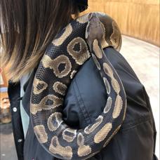 蛇歌のユーザーアイコン