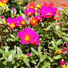 美々花のユーザーアイコン