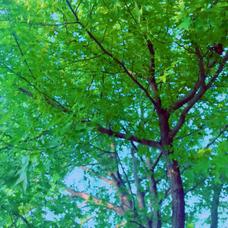 木風のユーザーアイコン