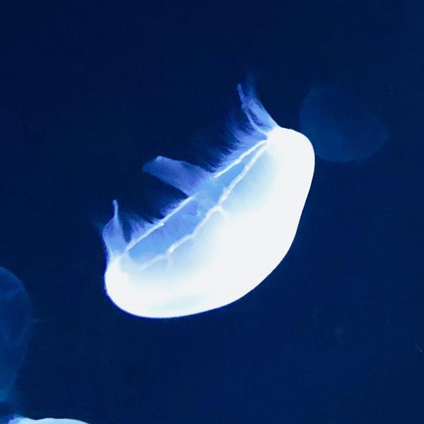 瑠璃のユーザーアイコン