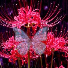 花織あゆみのユーザーアイコン
