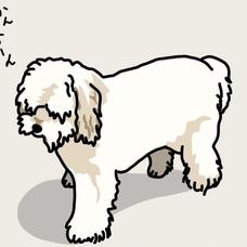 ノラ犬。のユーザーアイコン