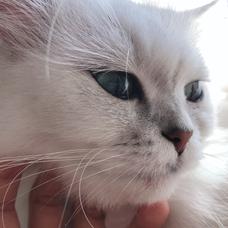 猫好きのユーザーアイコン