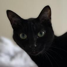 blackcatのユーザーアイコン