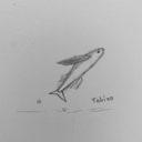 Tobiuoのユーザーアイコン