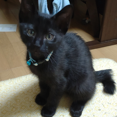黒猫めろんのユーザーアイコン