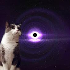 猫🐈⬛@ゆるく's user icon