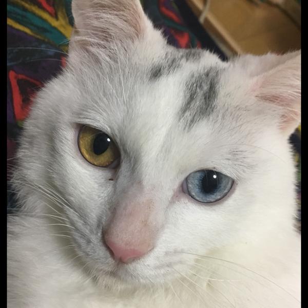 歌猫(おとぎ うた)のユーザーアイコン