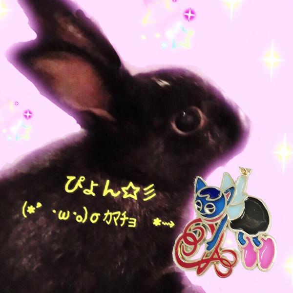 ぴょん☆彡  (*・ω・)/'オリジナルUP🤗💖✩のユーザーアイコン