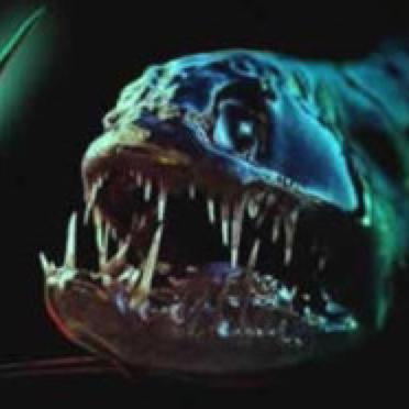 さかな@ついった:vvvvviperfishのユーザーアイコン