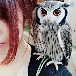葵's user icon