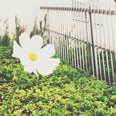 春風のユーザーアイコン