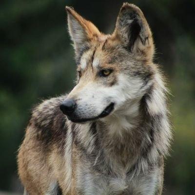 狼少年のユーザーアイコン