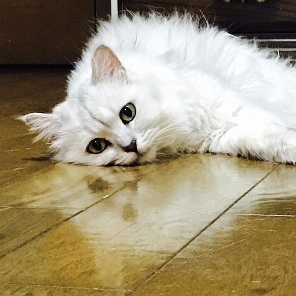 傘笠猫のユーザーアイコン