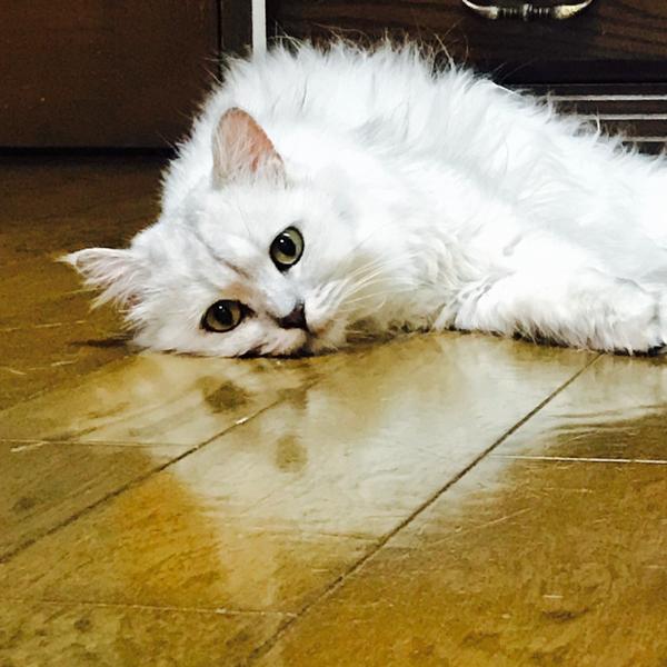 傘笠猫(リバー)のユーザーアイコン