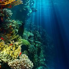 海底のユーザーアイコン