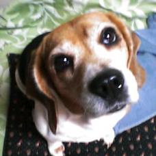 Kengo (a.k.a. beagle)のユーザーアイコン