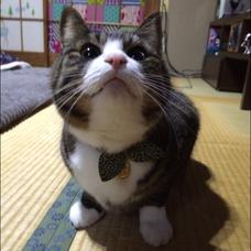 げんちゃんのユーザーアイコン
