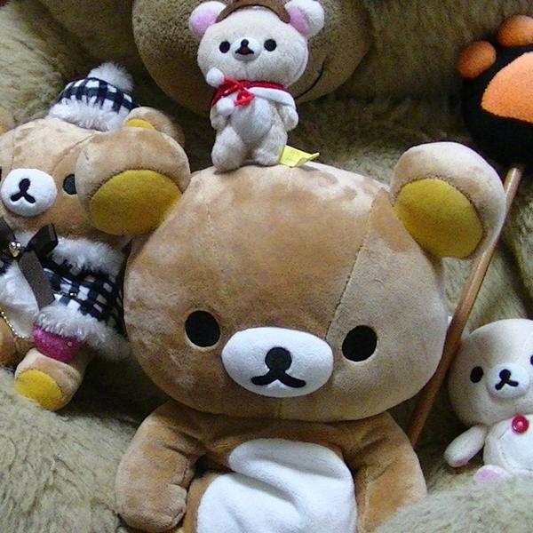 独燐檎@かなり稀熊のユーザーアイコン