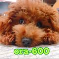 ora-600@nana荘2期生
