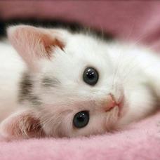 46猫のユーザーアイコン