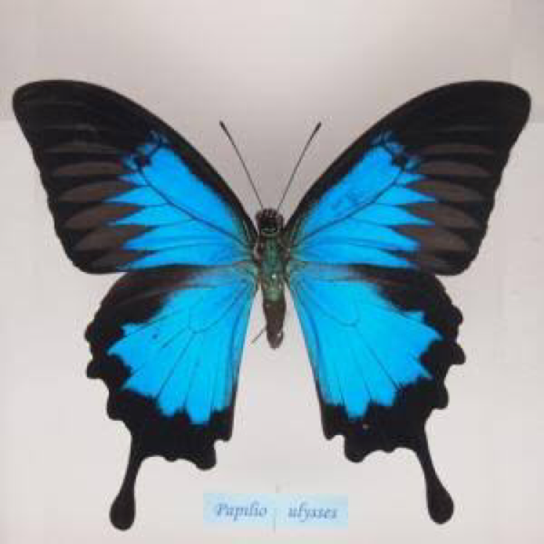胡蝶のユーザーアイコン