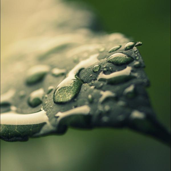 無音で雨 @声劇台本 のユーザーアイコン