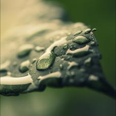 無音で雨 @声劇台本のユーザーアイコン