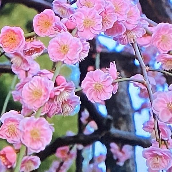 祇園の歌姫@りみ姐さん     tenの中継観た💕蓬莱さん男前やった🤗のユーザーアイコン