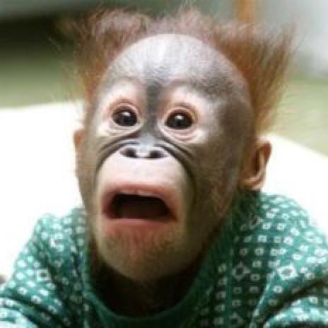 お猿のユーザーアイコン