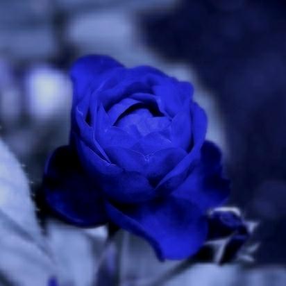 BLUE ROSE(元kureha)@フォロー整理。超低浮上のユーザーアイコン