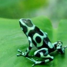 毒蛙のユーザーアイコン