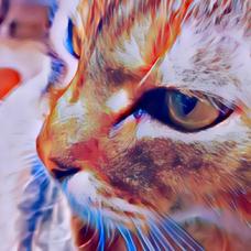 🐈猫好きひでぼー🐈アイコン変えたのユーザーアイコン