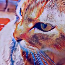 🐈猫好きひでぼー🐈のユーザーアイコン