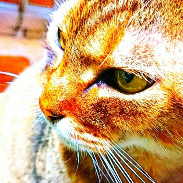 猫好きひでぼーのユーザーアイコン