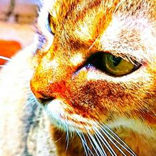 🐈猫好き🐱ひでぼー🐈のユーザーアイコン