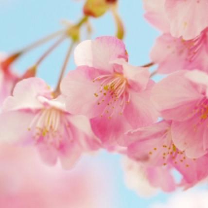 春@リアル多忙のため不定期のユーザーアイコン