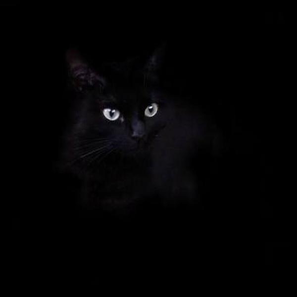 黒猫@歌、声劇レベル上げのユーザーアイコン