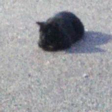 閉会希望の猫のユーザーアイコン