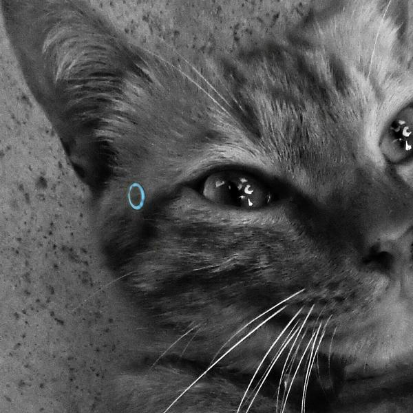 ぱう:BecomeHumyan(みゃんどろいどと暮らす)QuanticDreamを愛するHumanのユーザーアイコン