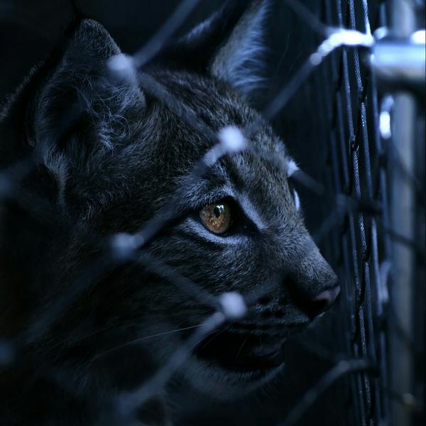 影猫のユーザーアイコン